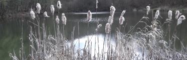 weiden-pfahlweiher